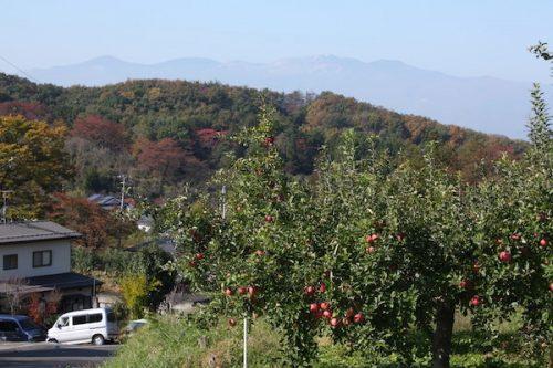 福島県福島市花見山公園の情報2016年11月7日 img_7359