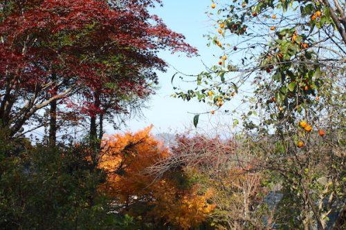福島県福島市花見山公園の情報2016年11月7日 img_7361