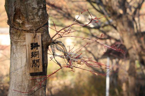 福島県福島市花見山公園の情報2016年12月2日 img_7556