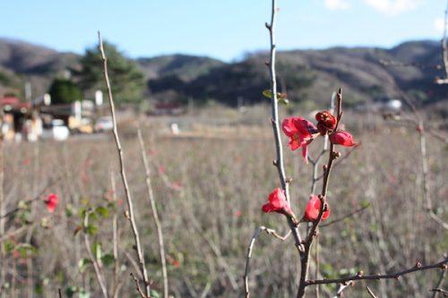 福島県福島市花見山公園の情報2016年12月2日 img_7594