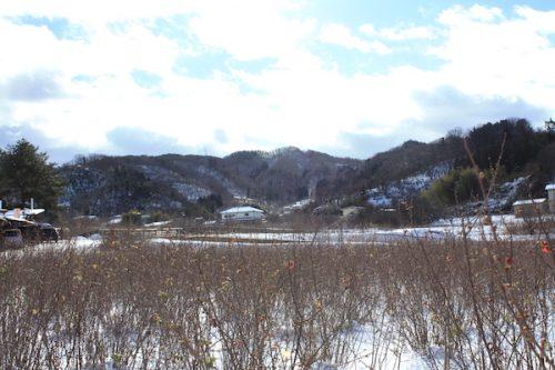 福島県福島市花見山公園の情報2017年1月17日 IMG_7703