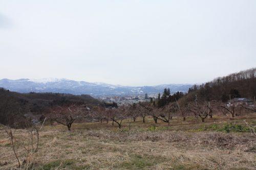 福島県福島市花見山公園の情報2017年2月22日 IMG_7771