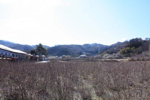 福島県福島市花見山公園の情報2017年3月17日 IMG_7787