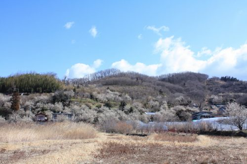 福島県福島市花見山公園の情報2017年3月17日 IMG_7790