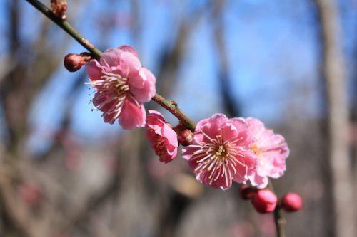 福島県福島市花見山公園の情報2017年3月17日 IMG_7824