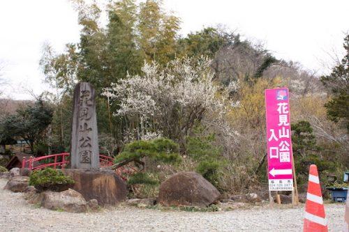 福島県福島市花見山公園の情報2017年3月31日 IMG_7842