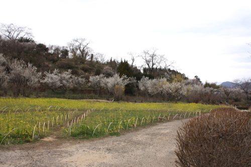 福島県福島市花見山公園の情報2017年3月31日 IMG_7869
