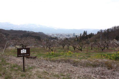 福島県福島市花見山公園の情報2017年3月31日 IMG_7884