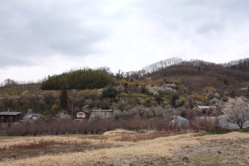 福島県福島市花見山公園の情報2017年3月31日 IMG_7905