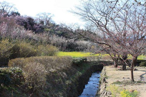 福島県福島市花見山公園の情報2017年4月7日 IMG_7977