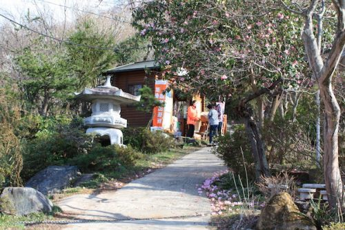 福島県福島市花見山公園の情報2017年4月7日 IMG_7983