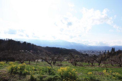 福島県福島市花見山公園の情報2017年4月7日 IMG_7989