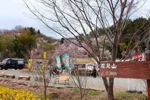 福島県福島市 花見山公園の情報2017年4月13日 IMG_8006