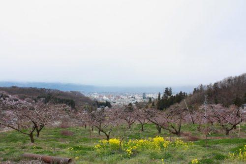 福島県福島市 花見山公園の情報2017年4月13日 IMG_8077