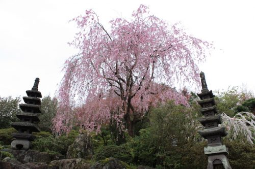 福島県福島市 花見山公園の情報2017年4月18日 IMG_8165