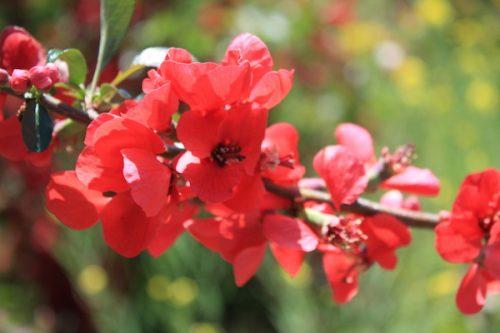 福島県福島市 花見山公園の情報2017年5月2日 IMG_8747
