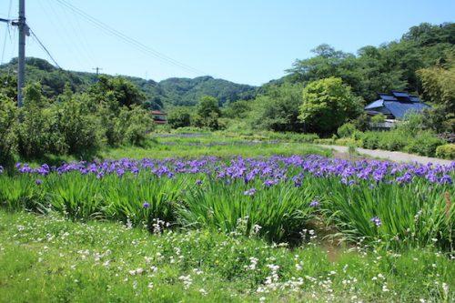 福島県福島市 花見山公園の情報2017年5月29日 IMG_8892