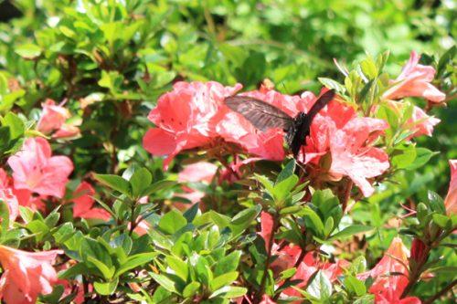 福島県福島市 花見山公園の情報2017年5月29日 IMG_8926_2