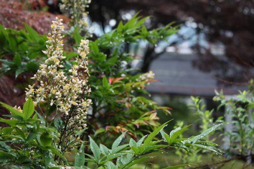福島県福島市 花見山公園の情報2017年7月4日 IMG_9080