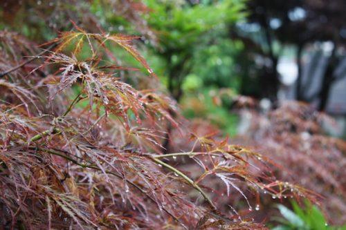 福島県福島市 花見山公園の情報2017年7月4日 IMG_9082
