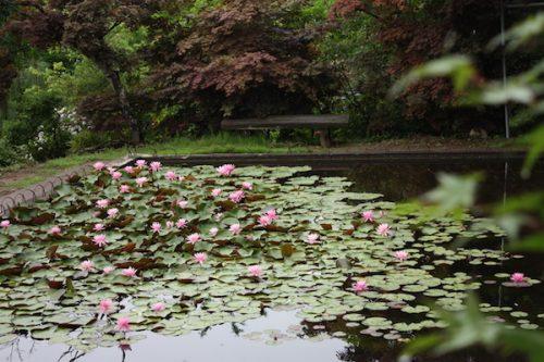 福島県福島市 花見山公園の情報2017年7月4日 IMG_9089