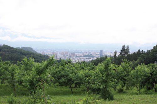 福島県福島市 花見山公園の情報2017年7月4日 IMG_9095
