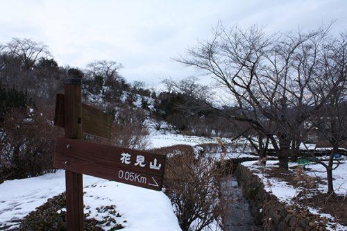 福島県福島市 花見山公園の情報2018年1月5日 菜の花畑方面 180105H9862