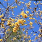 福島県福島市 花見山公園の情報2018年2月16日 IMG_9936