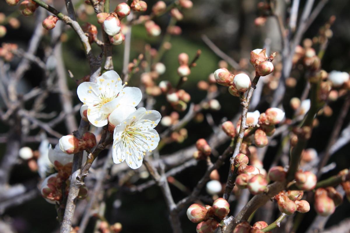 福島県福島市 花見山公園の情報2018年3月23日 IMG_0217