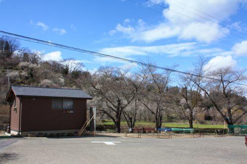 福島県福島市 花見山公園の情報2018年3月23日 IMG_0223