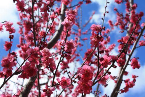 福島県福島市 花見山公園の情報2018年3月23日 IMG_0225