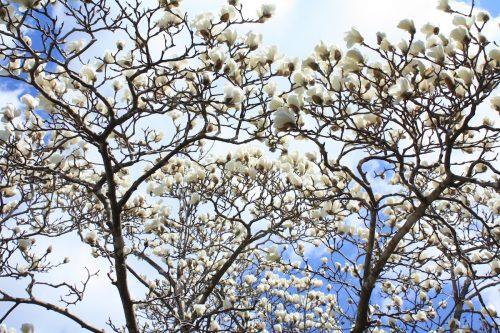 福島県福島市 花見山公園の情報2018年3月30日 IMG_0271