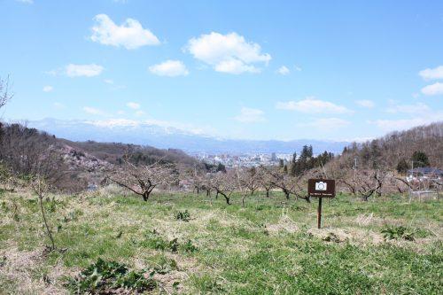 福島県福島市 花見山公園の情報2018年3月30日 IMG_0307