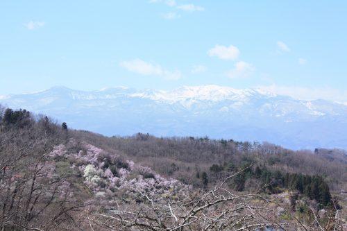福島県福島市 花見山公園の情報2018年3月30日 IMG_0312