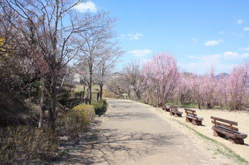 福島県福島市 花見山公園の情報2018年3月30日 IMG_0319