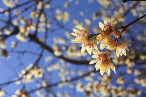 福島県福島市 花見山公園の情報2018年3月6日 IMG_9972