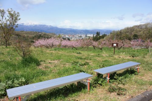 福島県福島市 花見山公園の情報2018年4月16日 IMG_0698
