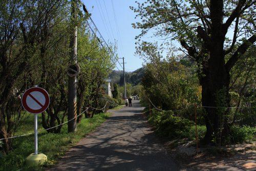 福島県福島市 花見山公園の情報2018年4月20日 IMG_0715