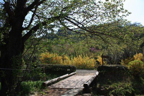 福島県福島市 花見山公園の情報2018年4月20日 IMG_0716