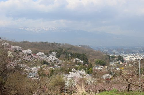 福島県福島市 花見山公園 2018年4月4日 IMG_7918