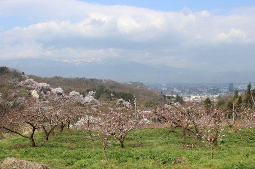 福島県福島市 花見山公園 2018年4月4日 IMG_7919