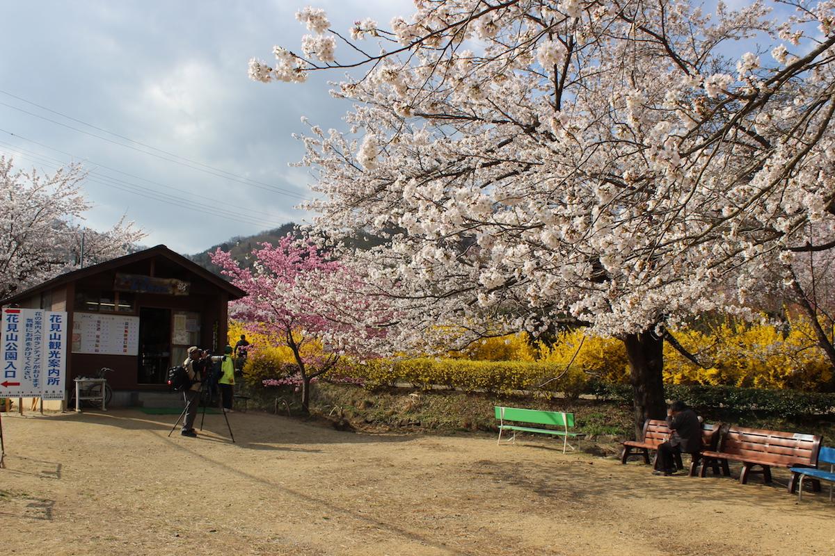 福島県福島市 花見山公園 2018年4月4日 IMG_7931