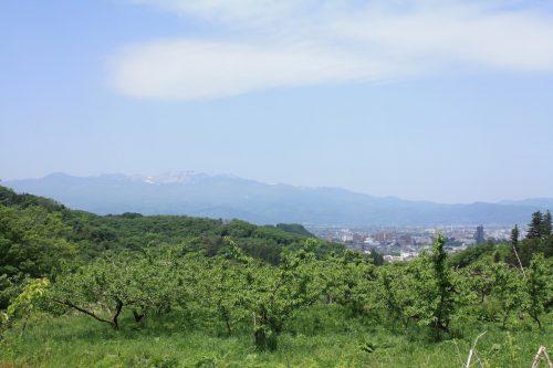 福島県福島市 花見山公園の情報2018年5月15日 IMG_1023