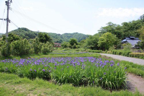 福島県福島市 花見山公園の情報2018年5月15日 IMG_1025