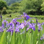 福島県福島市 花見山公園の情報2018年5月15日 IMG_1026
