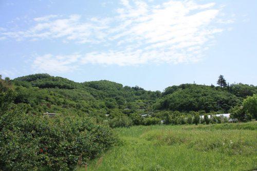 福島県福島市 花見山公園の情報2018年5月15日 IMG_1027