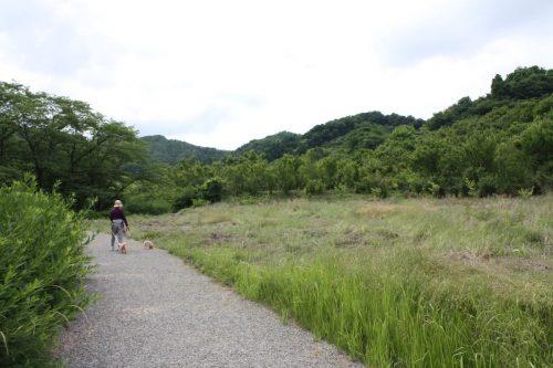 福島県福島市 花見山公園の情報2018年6月19日 IMG_4839