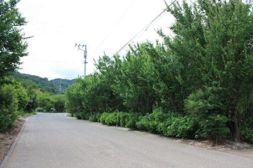 福島県福島市 花見山公園の情報2018年6月19日 IMG_4842