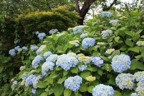 福島県福島市 花見山公園の情報2018年6月19日 IMG_4847
