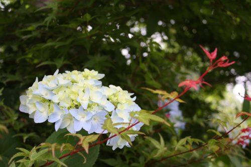 福島県福島市 花見山公園の情報2018年6月19日 IMG_4848